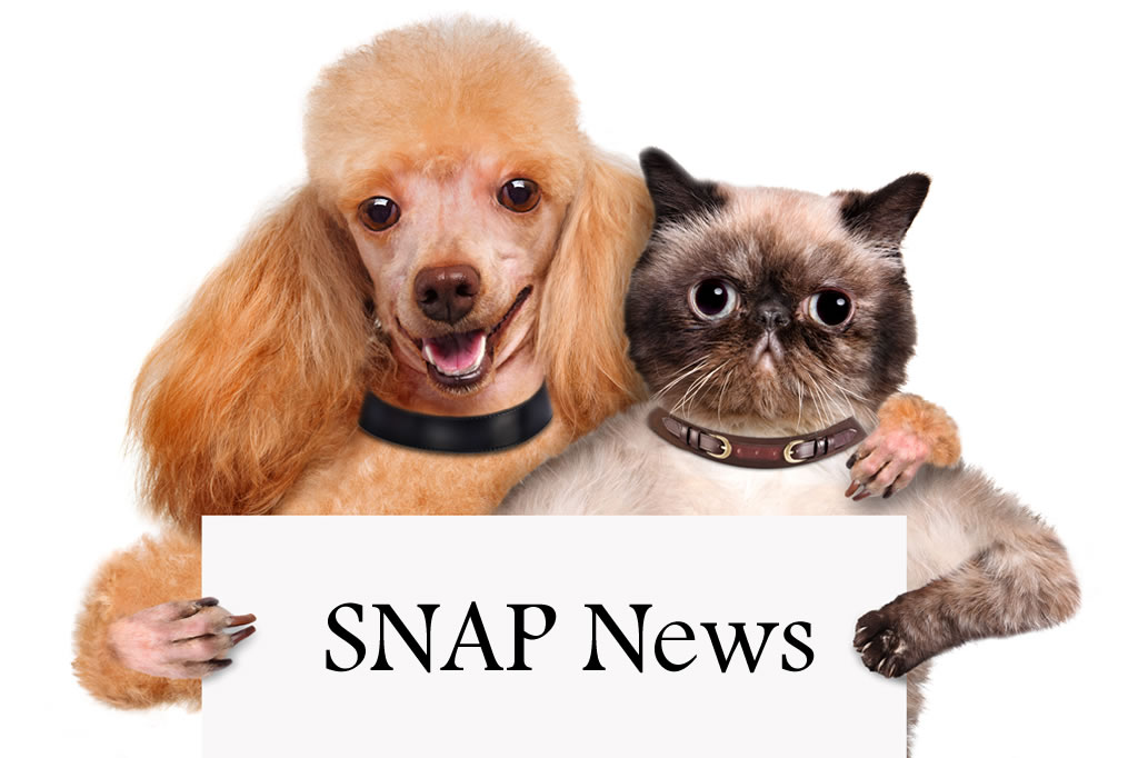 Go To Snap News Page