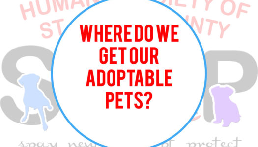 Where do our adoptable pets come from?