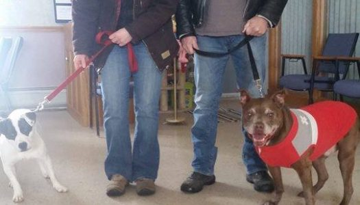 Scout Adopted!