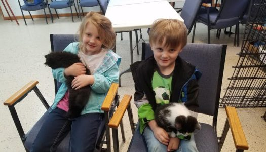Eclipse & Dice Adopted Together!