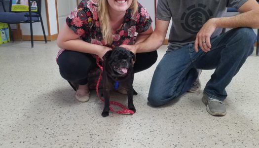 Brody Adopted!