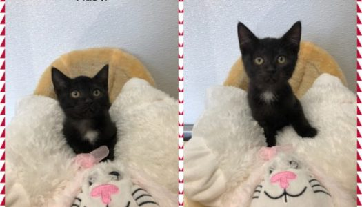 Willow & Hawthorne – Adopted