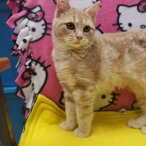 Kassidy ADOPTED