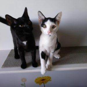 Kermit & Gonzo ADOPTED