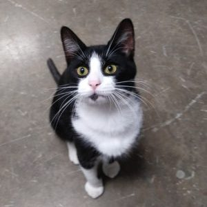 Figaro ADOPTED