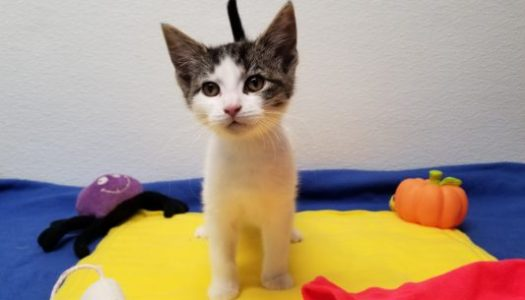 Hermione ADOPTED – Harry Potter Litter